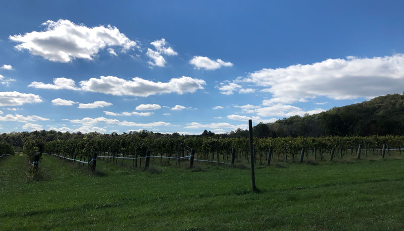 Northgate Vineyard Virginia